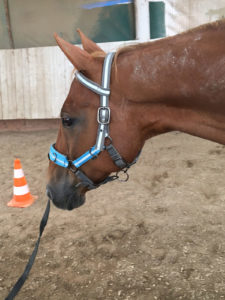 Bodenarbeit Pferd Lara Bauer