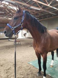 Bodenarbeit mit Pferden Lara Bauer